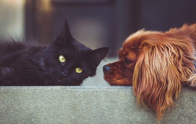Jornada para las mascotas en el barrio el Dorado con la Inspección de Málaga y la secretaría de salud de Santander